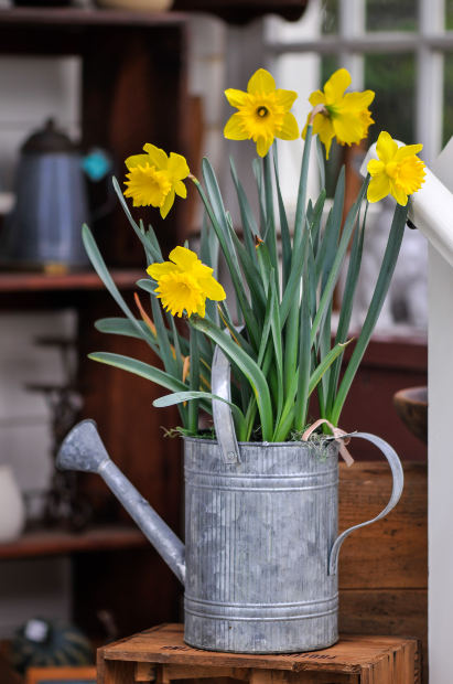 How To Force Bulbs During Winter To Add Beautiful Spring